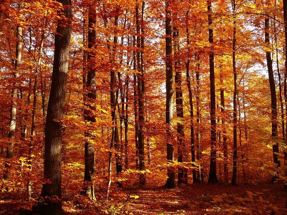 Foliage a Cogne