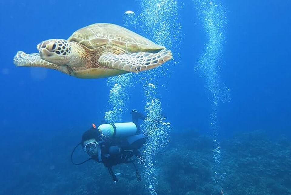 kerama-kame-diving1