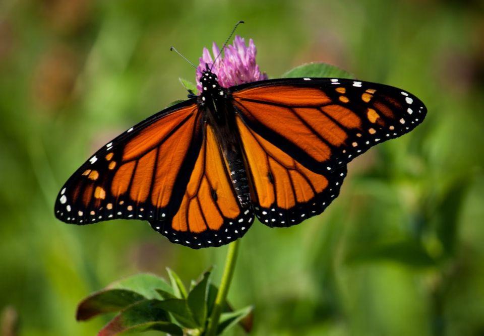 Messico un tour dove l 39 unico rumore il battito d 39 ali di - Immagini di farfalle a colori ...