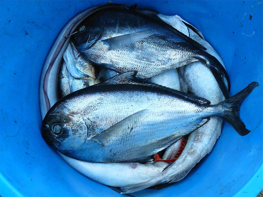 fish-seafood-silver-contrast-52964