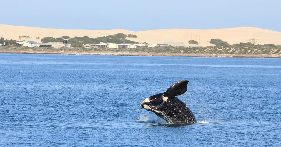 WhaleWatchingGreatAustralianBight